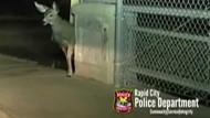 Polizist befreit Reh aus misslicher Lage