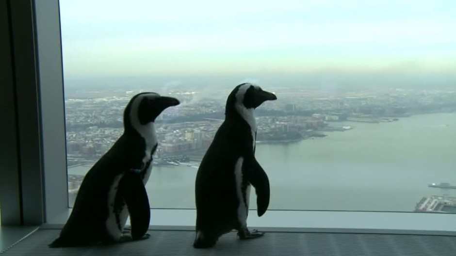 Pinguine besuchen World Trade Center