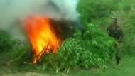 Bolivianische Polizei verbrennt 14 Tonnen Marihuana