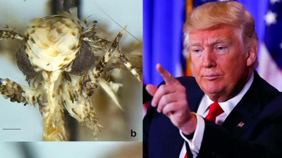 Biologe benennt Motte nach Donald Trump