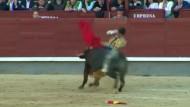Stier nimmt Torero auf die Hörner