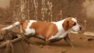 Hilfe für Tiere in Kolumbiens Überschwemmungsgebieten