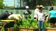 Mit Wegwerf-Gemüse gegen die Verschwendung