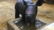 Moyos erstes Bad