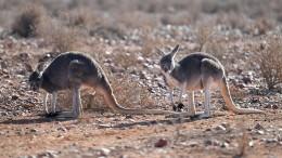 Dürre in Australien bringt diverse Gefahren mit sich