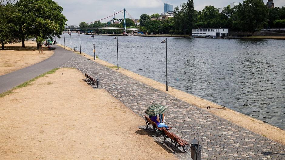 Vertrocknete Rasenflächen am Main in Frankfurt