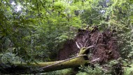 """Der polnische Wald """"Bialowieza"""" gehört zum Weltkulturerbe – und wird trotz eines Green Bonds abgeholzt."""