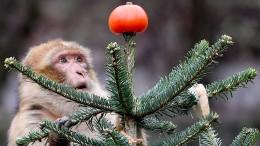 Weihnachtsbaum-Randale im Zoo