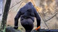 Meine Freundin ist kein Gorilla