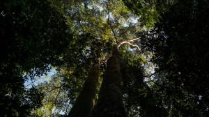 Das Labor im Regenwald