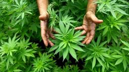 Wer hat immer noch kein Cannabis-Duschgel?