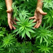 Die Vorstellung von kiffenden Hippies rückt in den Hintergrund, Cannabis goes Mainstream.