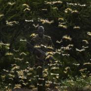 Kampfbereit: Ein Ranger gibt Koordinaten im Norden Kenias an Flugzeuge weiter, die dann Pestizide versprühen.