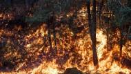 Mehr als die Hälfte der Brände sollen durch Brandstiftung verursacht worden sein.
