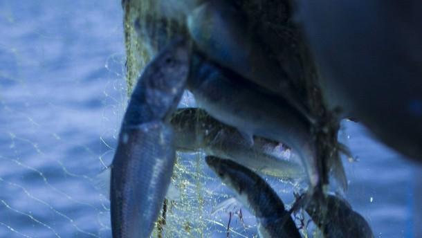 Wie auf dem Fischmarkt
