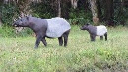 Erstmals Nashörner im Opel-Zoo