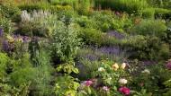 Auf die Lage kommt es an: Lavendel mag lockere Erde und ein sonniges Plätzchen, andere Kräuter lieben es schattig.