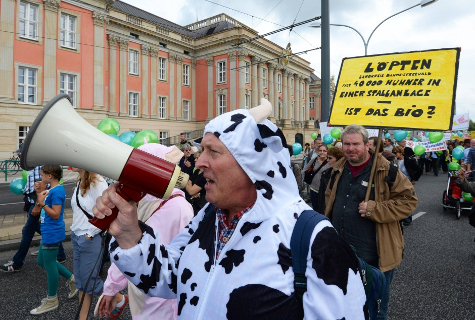 """Ein als Rind verkleideter Demonstrant läuft am 31. August dieses Jahres während einer Protestaktion unter dem Motto: """"Wir haben es satt - Massentierhaltung abwählen"""" am Landtag in Potsdam (Brandenburg) vorbei"""