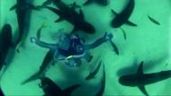 Taucherin tanzt mit Haien
