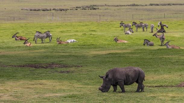 Freie Bahn für Wilderer