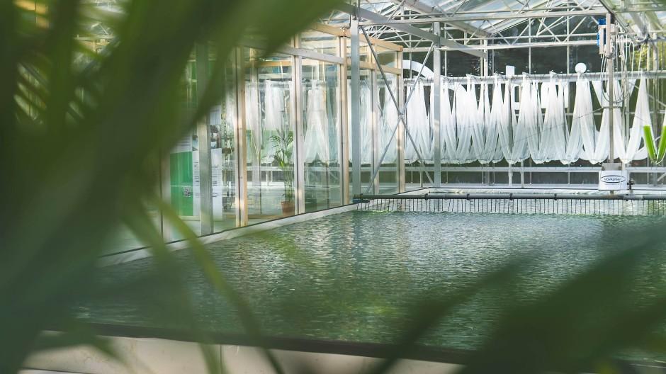 Grün ist die Zukunft: Auf dem Dach dieses Rechenzentrums wachsen Algen mit Hilfe der Server-Abwärme.