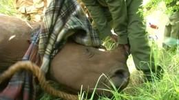 Nashorn nur mit Kerbe erkennbar