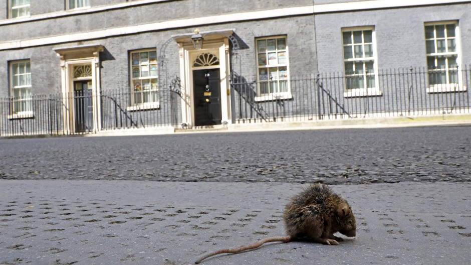 Wo sind all die Menschen? Im Lockdown mit seinen Ausgangsbeschränkungen wagte sich diese Ratte im Sommer sogar bis vor 10 Downing Street.