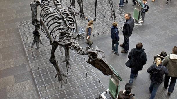 Bücherdieb soll auch 1000 Fossilien gestohlen haben