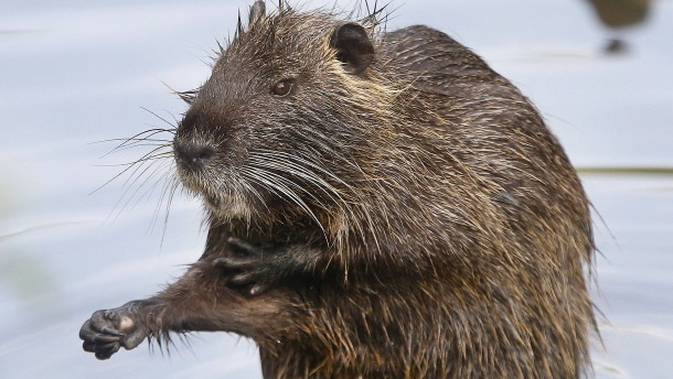Füttern oder erschießen: Der Städter und die Wildtiere
