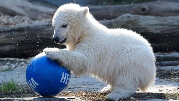 Kleine Eisbärin hat endlich einen Namen