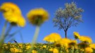 Frühlingsboten und Sonnenschein. Das Wochenende wird sommerlich.