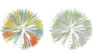 Von Sars-Cov-2 liegen rund 300.000 Genome vor. Hier sind knapp 4000 Fälle in Stammbäumen chronologisch arrangiert, die bunt Altersgruppen (rechts) oder Regionen herausstellen.