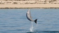 Hamas enttarnt Flipper