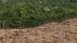 Die Wälder wieder aufforsten – geht das?