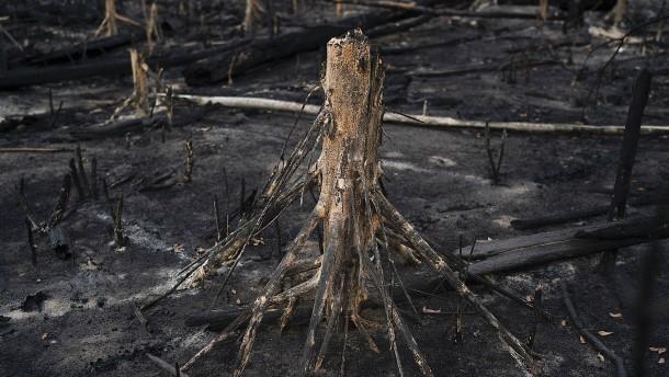 Vernichtung von Amazonas-Regenwald massiv angestiegen