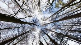 Feinde des Waldes