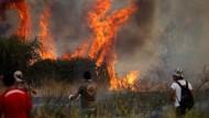 Völlige Verwüstung durch Waldbrände in Chile