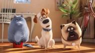 """In einem Familienfilm wie """"Pets"""" geht es natürlich um Freundschaft. Es ist eine Mischung aus alberner Situationskomik und niedlichen Tieren – nicht mehr, aber auch nicht weniger."""