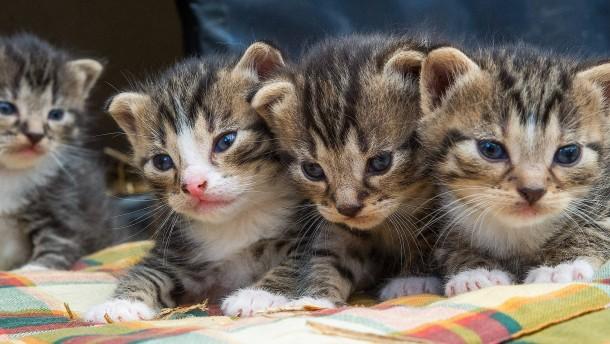 Wenn die Kätzchen zu viele werden