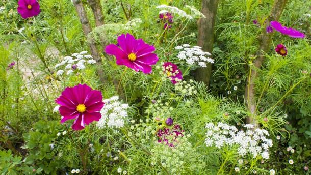 Sehnsucht lässt wilde Blüten treiben