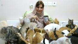 Ein Herz für 480 Katzen