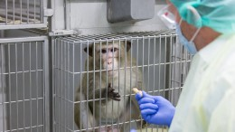 Zahl der Tierversuche 2016 bundesweit gestiegen