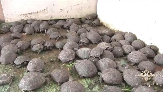 Was macht man mit 4000 beschlagnahmten Schildkröten?