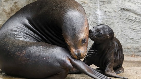 Süßes Robben-Baby macht erste Schritte