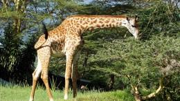Elf Tote beim Absturz eines Safari-Flugzeugs