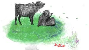 Wasserbüffel in der Eifel