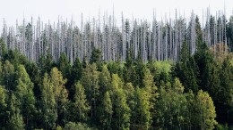 Waldschäden größer als bisher angenommen