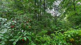 Klimastabiler Wald als Ziel
