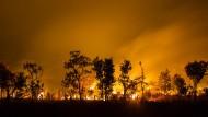 Landschaftspflege: Im Kafue-Nationalpark in Sambia erhalten Buschfeuer das natürliche Gleichgewicht zwischen Gras und Bäumen.