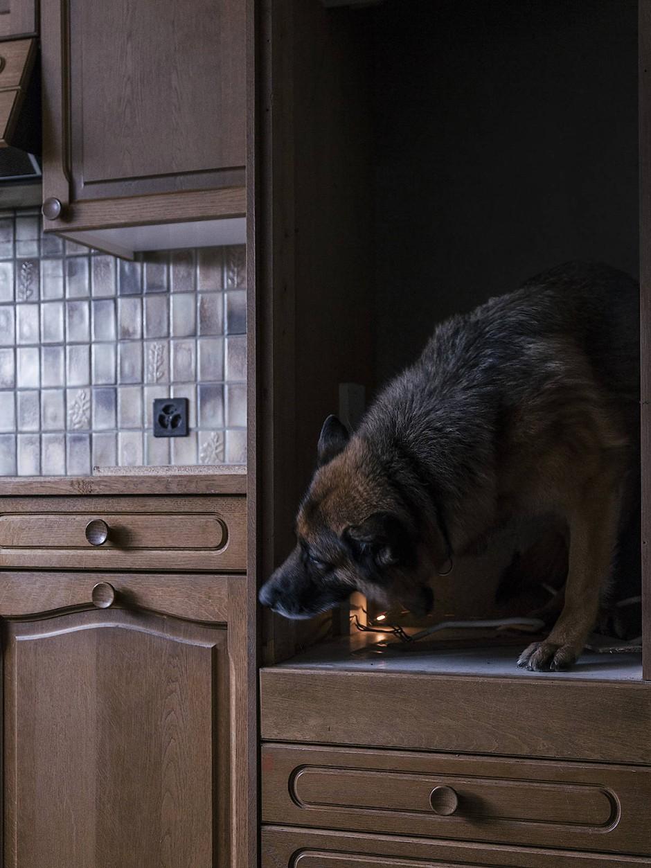 """Eine Hundestaffel sucht nach Drogen. Aus der Serie """"How to Secure a Country"""", 2014-2018."""